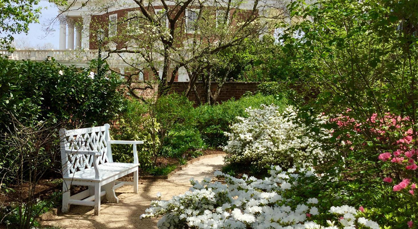 Lovely UVA Garden With Rotunda In The Background